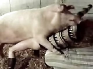 Sexy brunette fucks with huge pig